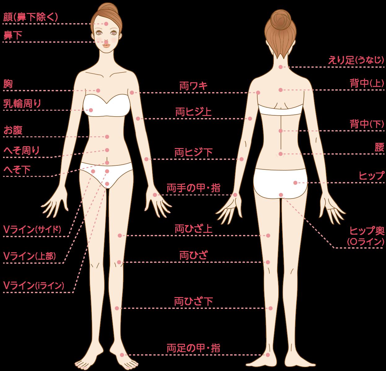"""全身24カ所対象の""""全身脱毛""""コース"""